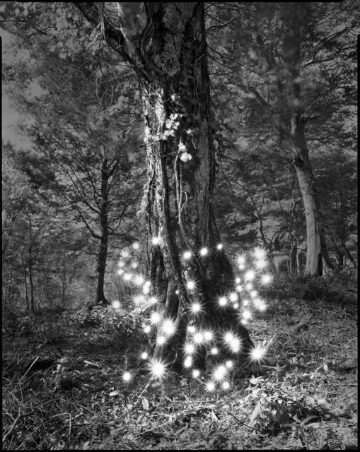 Tokihiro Sato, 'Photo Respiration Trees Shirakami #2', 2008, Micheko Galerie