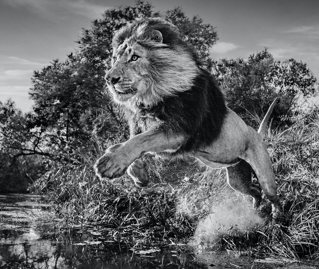 David Yarrow, 'First Down', 2020, Photography, Archival Pigment Print, Hilton Asmus