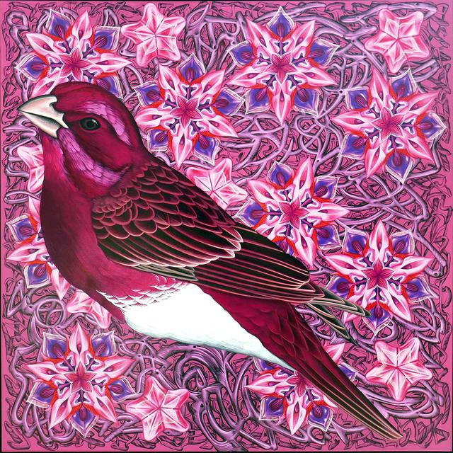 Kevin Veara, 'Exult #50 Purple Finch', 2019, Springfield Art Association