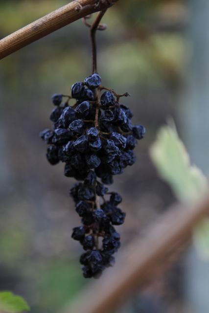 , 'Vino,' 2010, ACS GALLERY