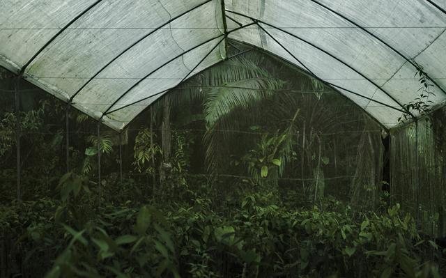 , 'End of the Garden,' 2010, Willas Contemporary
