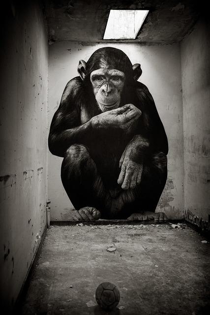 , 'Le Chimpanzé au Domaine de Pressigny les Pins,' 2018, Mazel Galerie