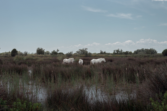, 'Trois chevaux blancs,' 2016, The Print Atelier