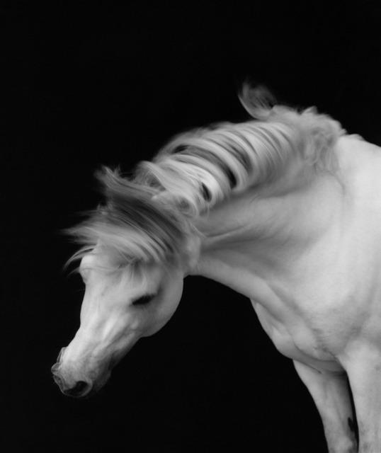 Sheila Rock, 'Horse #1', ca. 1999, ElliottHalls