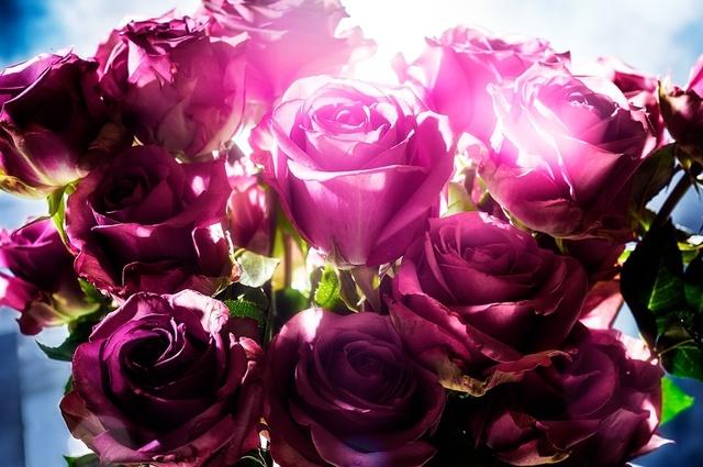 David Drebin, 'Spotting Rose', 2014, Isabella Garrucho Fine Art