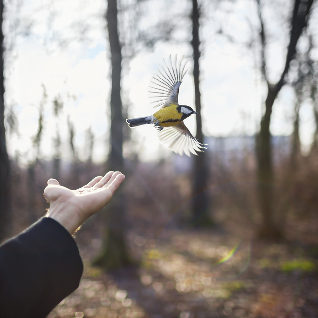 , 'Goldfinch,' 2014, photo-eye Gallery