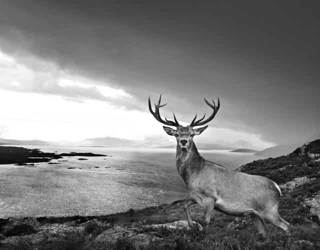 , 'Over the Sea to Skye,' 2017, Hilton Asmus