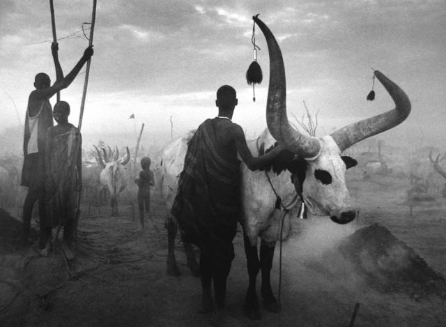 Sebastião Salgado, 'Dinka Group at Pagarau Cattle Camp, Southern Sudan, Africa', 2006-printed 2008, Scheinbaum & Russek Ltd.