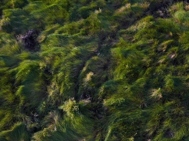, 'Delacroix Island, St. Bernard Parish, Louisiana,' 2016, A Gallery for Fine Photography