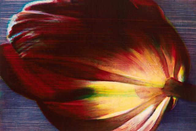 , ''Flame Tulip',' 2015, Australian Print Workshop