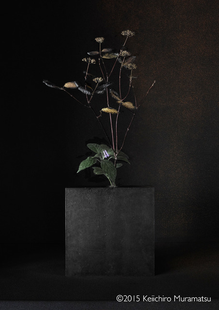 , 'A Stage Hydrangea 6-4,' 2015, Galerie Marie-Robin