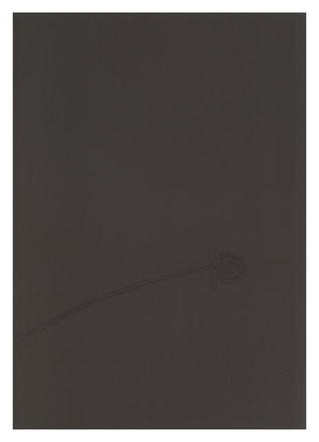 Michael Krueger, 'Dry Flower', 2015, Haw Contemporary