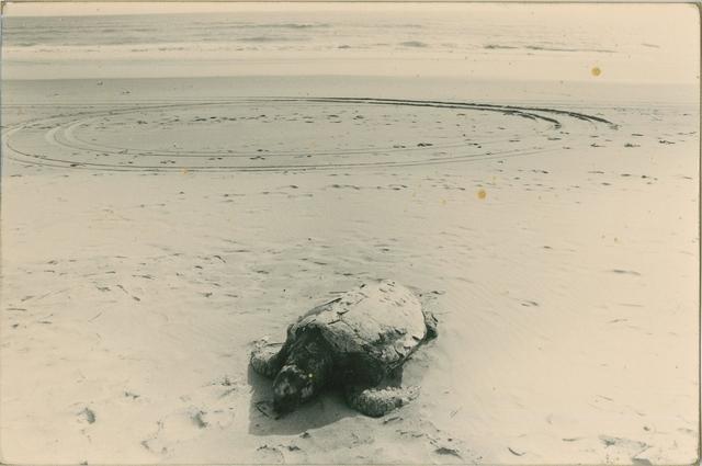 Yamamoto Masao, '0126, from A Box of Ku', Etherton Gallery