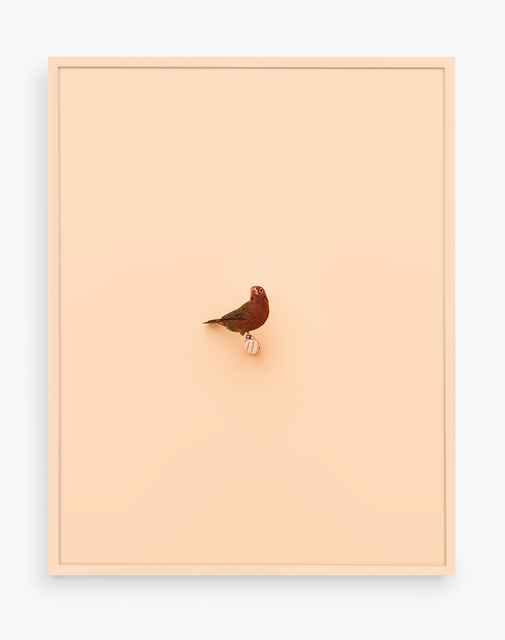 , 'Senegal Fire Finch (Peach Puff),' 2017, ClampArt