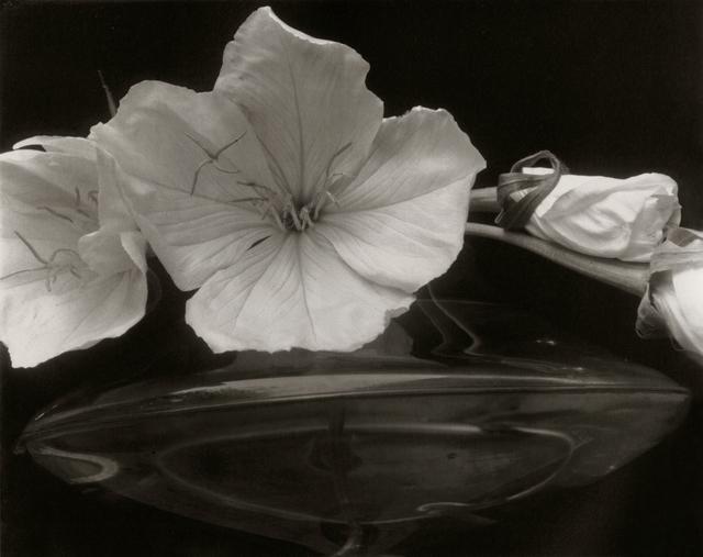 , 'Evening Primroses,' 1928, Gallery 270