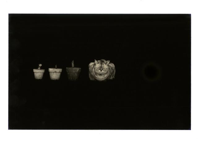 , 'Kawa = Flow #280,' 1994, Atlas Gallery
