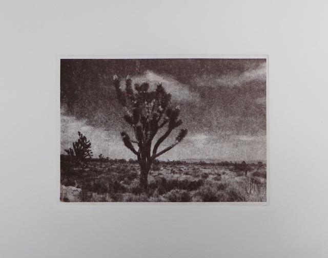 , 'In The Joshua Trees,' 2017, SHIM Art Network