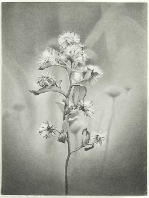 Mary Reilly, 'Wildflower, Jamaica Bay', 2011, Garvey   Simon