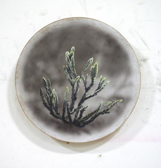 , 'Diphasiastrum Issleri ,' 2019, Ani Molnár Gallery