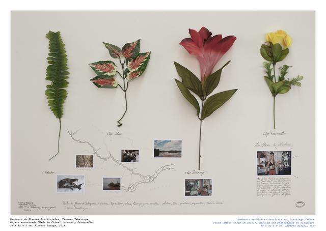 , 'Taxones Tabatinga - Herbario de Plantas Artificiale,' 2014, Instituto de Visión