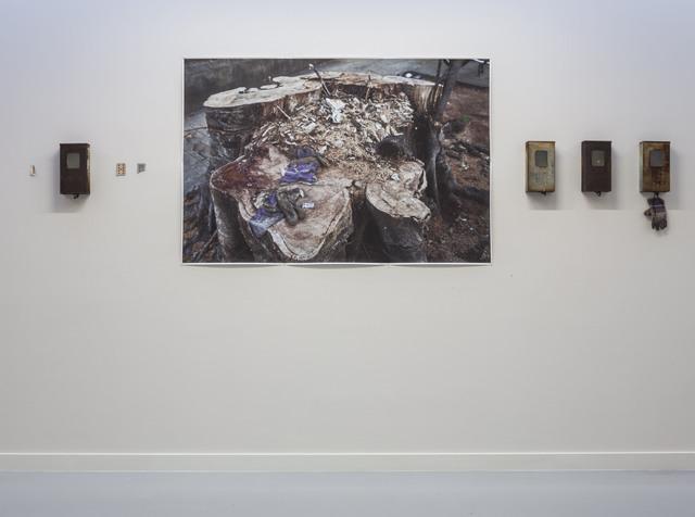, 'Árbol cortado y escombros (Cutted  tree and debris) ,' 2016, Galerie Nathalie Obadia