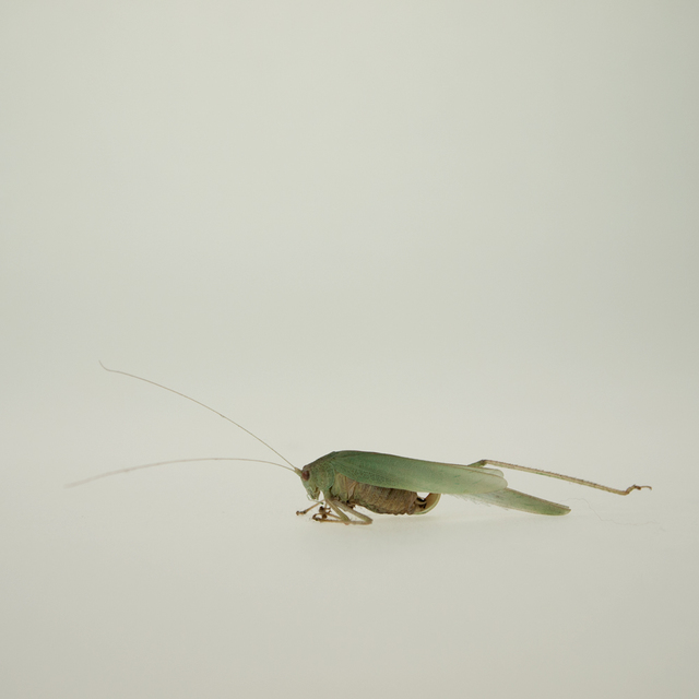 , 'TDTDC 29 (Grasshopper),' 2011, photo-eye Gallery