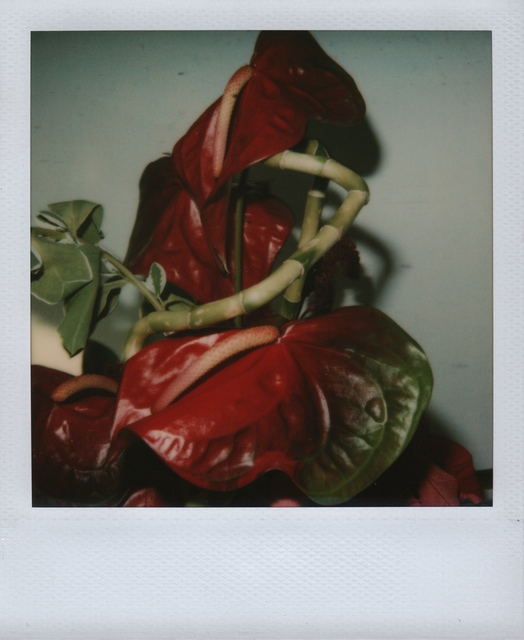 Nobuyoshi Araki, 'Flower', ca. 2005, Grob Gallery