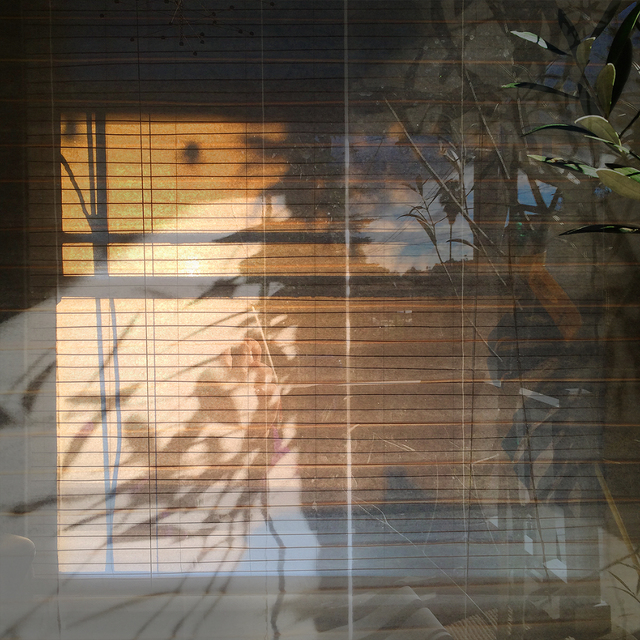 , 'Window with Olive Tree,' 2017, DENK Gallery