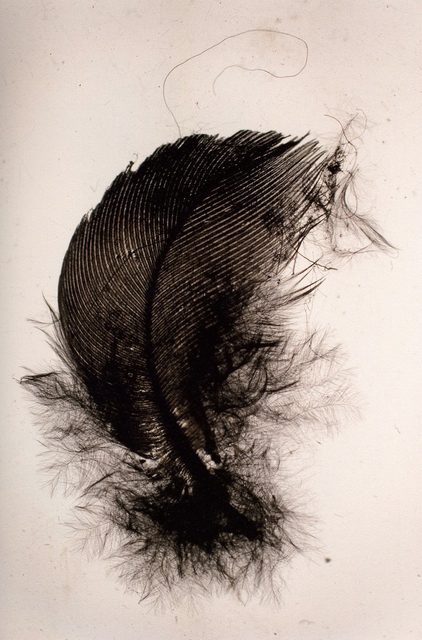, 'Penas (Feather),' 2010, Galerija Gregor Podnar