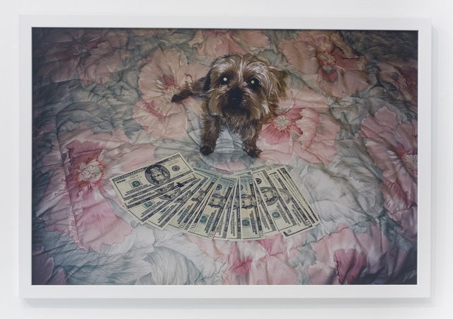 , 'Little dog on floral comforter,' 2004, The Hole