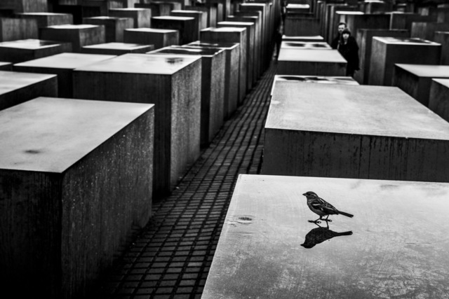 Ziv Koren, 'Berlin, Germany May 2013 - The Memorial to the Murdered Jews of Europe, 2,711 concrete slabs arranged in a grid pattern on a sloping field.', 2013, Ouro Studio