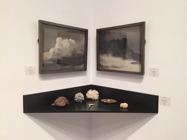 , 'Brains in Nature,' 1993, David Richard Gallery