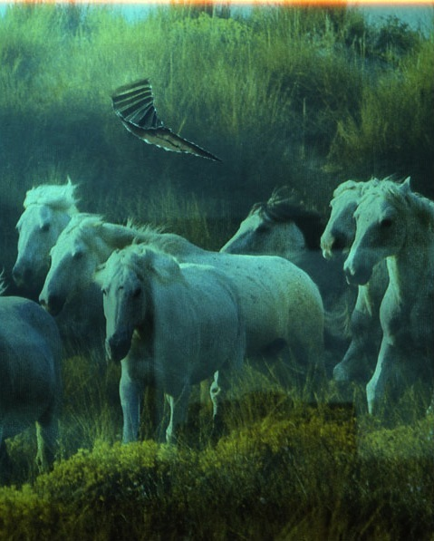""", 'Horses, from the series """"A few days more"""",' 2008, CHRISTOPHE GUYE GALERIE"""