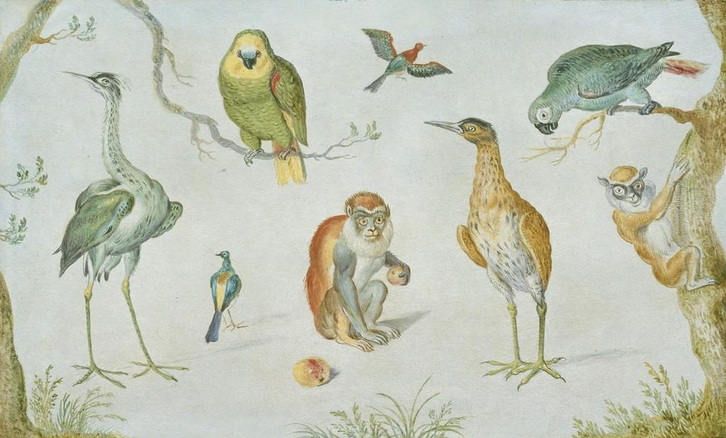 Circle of Jan van Kessel I | Study of Birds and Monkeys (1660/1670 ...