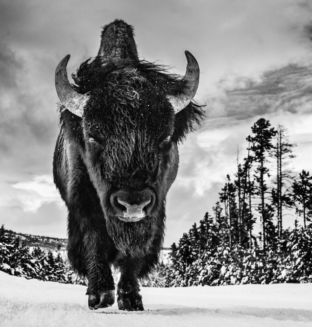 David Yarrow, 'The American Idol', ca. 2017, Samuel Lynne Galleries
