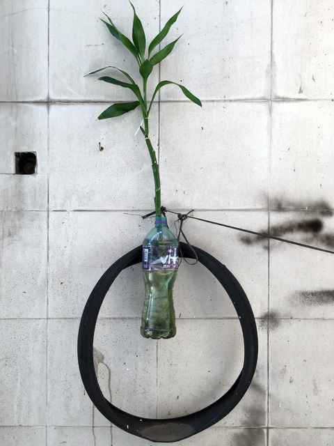 , 'Hong Kong Flora,' 2015, Flowers