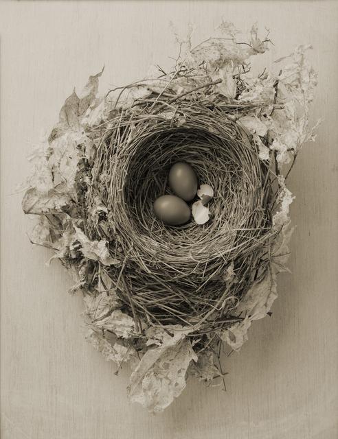 Yumiko Izu, 'Icarus 12', 2016, Howard Greenberg Gallery