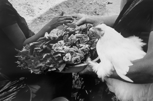 , 'Gallina, Flores y Moneda,' 1984, ROSEGALLERY