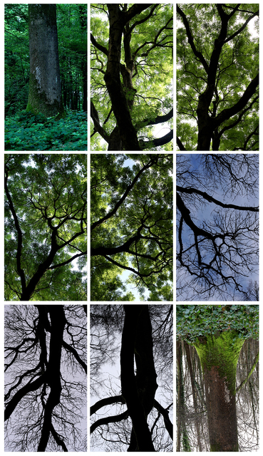 Jeffrey Blondes, 'Le Bois de Mametz', GBS Fine Art