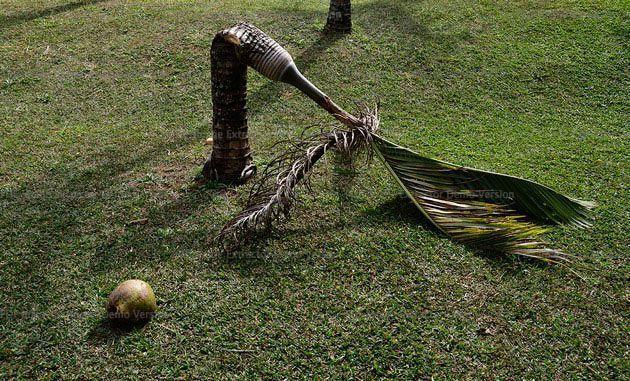""", '""""Coqueirinho"""" da série """"Lugar Comum"""",' 2013, Luciana Brito Galeria"""