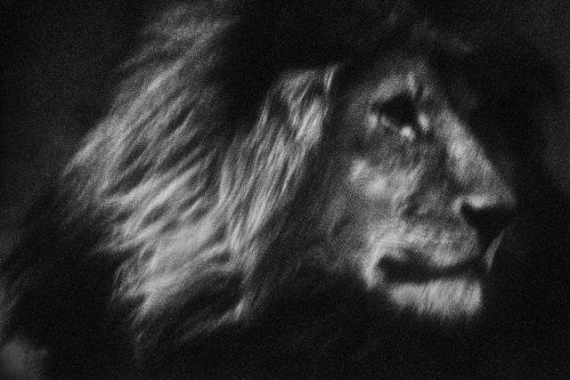 , 'Lone Lion,' 2007, Bluerider ART