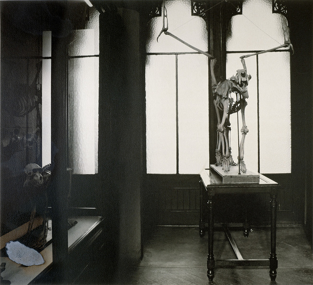 , 'SERIE FAUNIA,1985-1989 FELIS PENNATUS,' 1989, espaivisor - Galería Visor