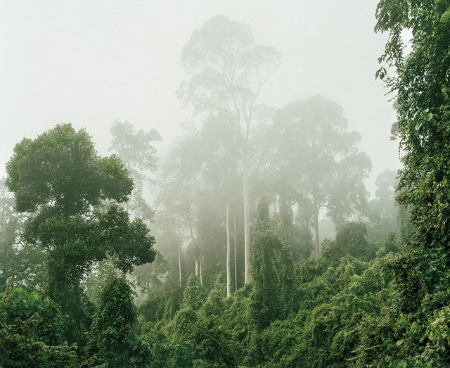 , 'Primary forest 04, Malaysia,' 2012, Galerie f5,6
