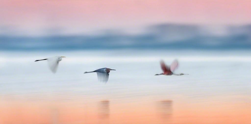 """Twilight Blur""   Beautiful Florida Birdscapes with pre-sunrise colors!"