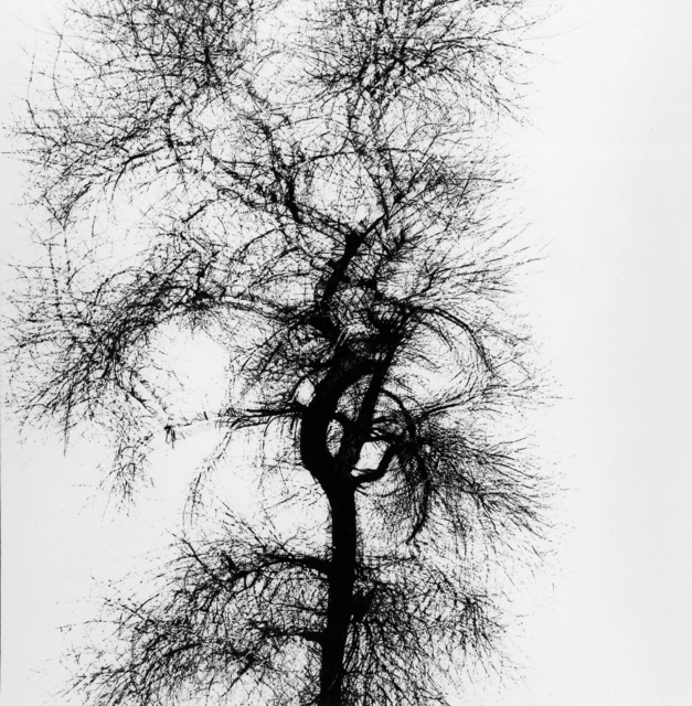 , 'Multiple Exposure Tree, Chicago,' 1956, Etherton Gallery