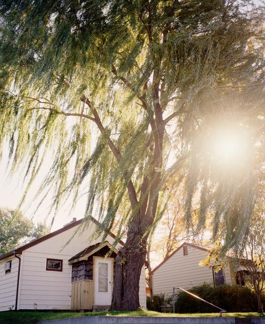 Gregory Halpern, 'Omaha, NE (Sun Through Willows)', 2005-2018, Huxley-Parlour