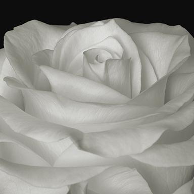 Joseph Jurson, 'Beauty in Form #1', not available, Susan Spiritus Gallery