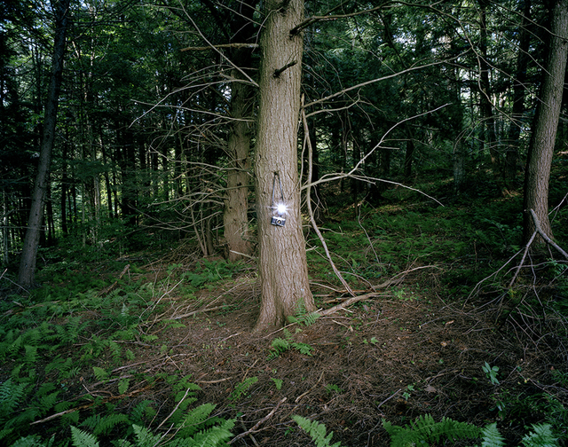 , 'A camera in the forest,' 2008, ClampArt