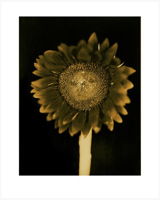 Chuck Close, 'Untitled (Sunflower)', 2011, Adamson Gallery