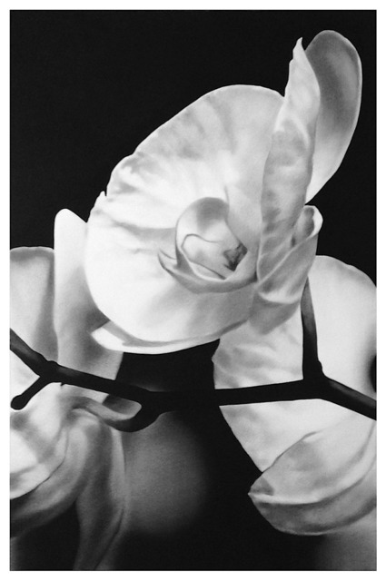 , 'Orchids 1,' 2017, Mazel Galerie